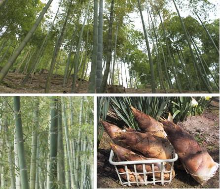 「西田筍」の画像検索結果